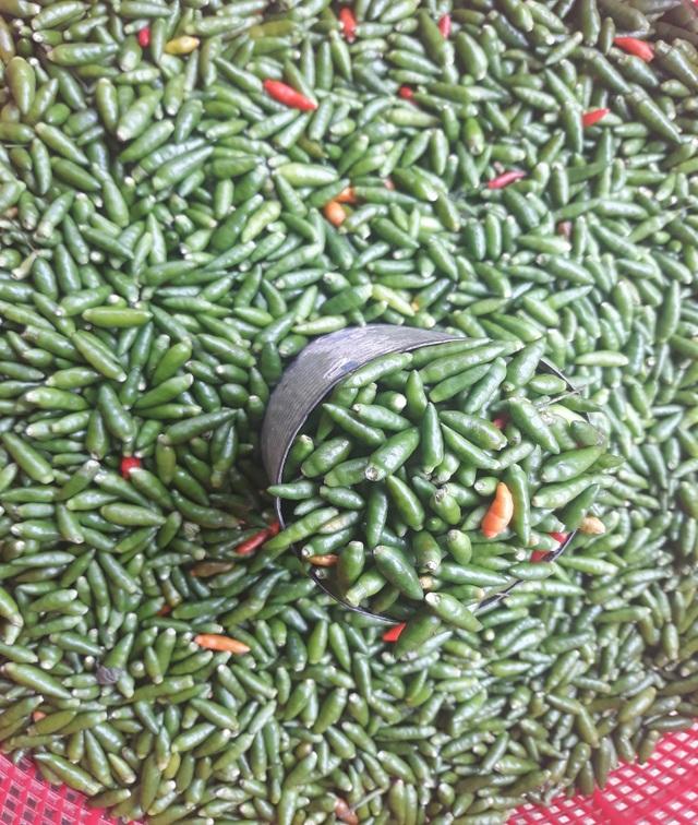 Giá ớt xiêm rừng thấp nhất là 50 ngàn đồng, cao nhất là 150 ngàn đồng mỗi kg