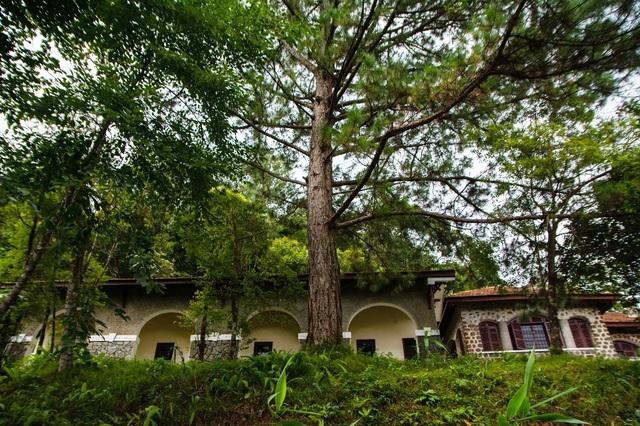 Những biệt thự còn lại nằm trong rừng thông