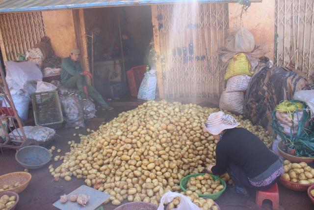 Thương lái đang tân trang cho khoai tây Trung Quốc cho giống đặc sản khoai tây Đà Lạt