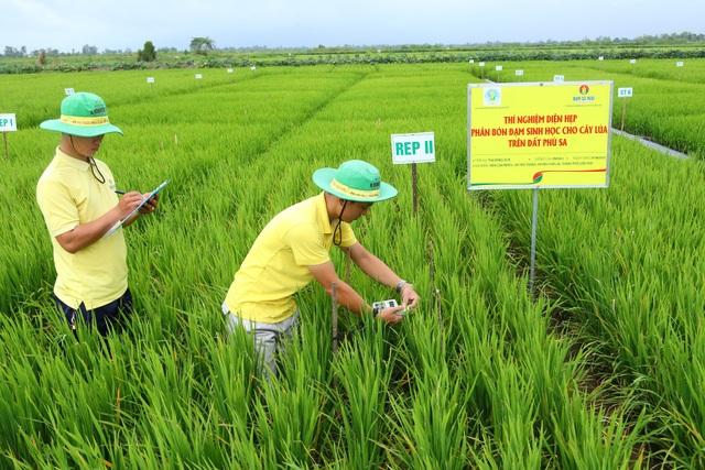 Ruộng thí nghiệm bộ sản phẩm Đạm Cà Mau cho cây lúa