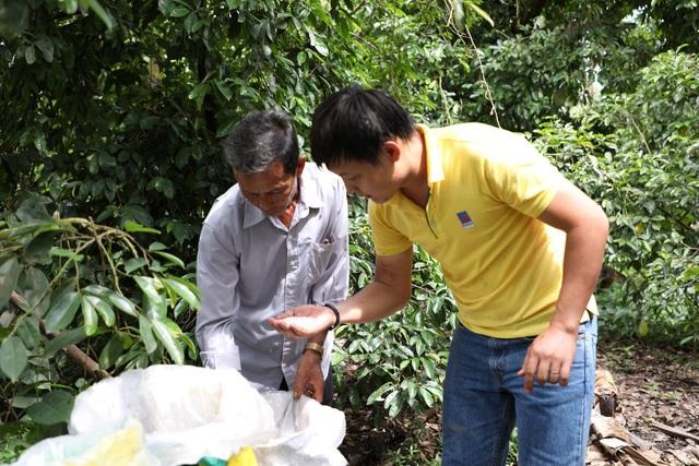 Kỹ sư Đạm Cà Mau tư vấn cách bón cây ăn trái tại Hợp tác xã Mãng Cầu gai.
