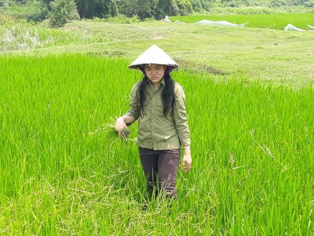 Tranh thủ lúc không đi học, Tú lại ra đồng làm cỏ cho lúa.