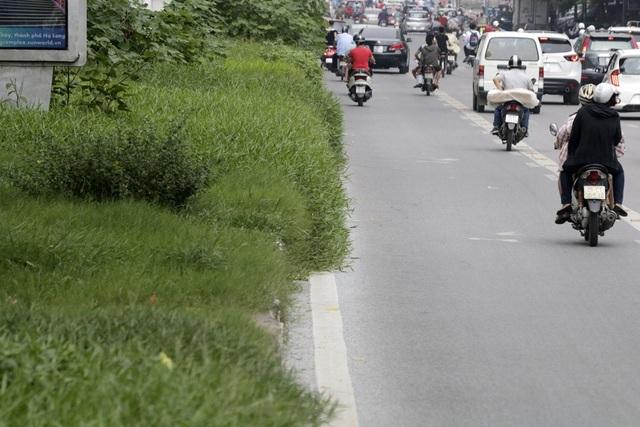 Hà Nội: Cây dại mọc như ở bãi hoang giữa phố Giảng Võ - 10