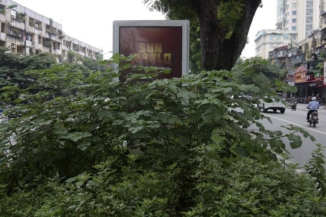 Hà Nội: Cây dại mọc như ở bãi hoang giữa phố Giảng Võ - 11