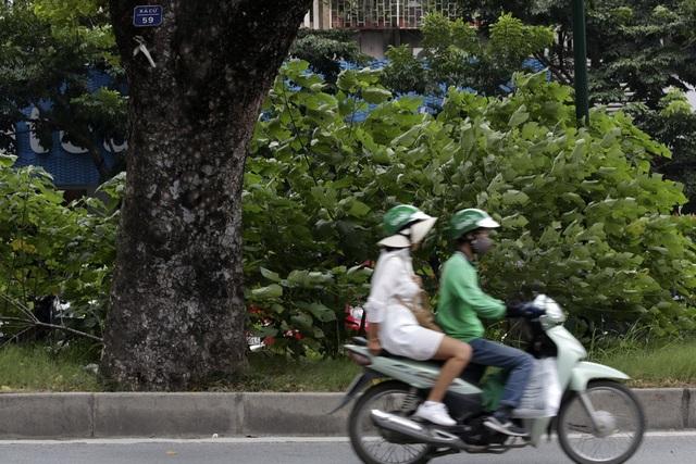 Hà Nội: Cây dại mọc như ở bãi hoang giữa phố Giảng Võ - 12