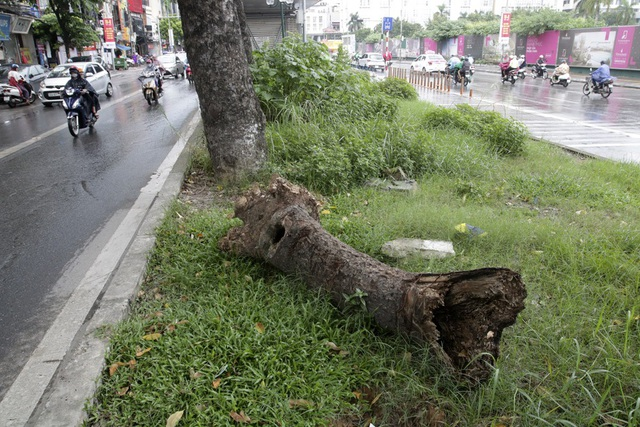 Hà Nội: Cây dại mọc như ở bãi hoang giữa phố Giảng Võ - 8
