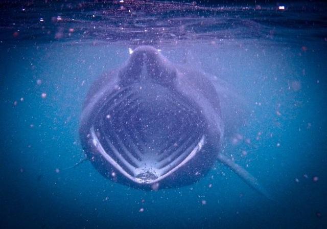 Cá mập phơi - Ảnh từ Rebecca Belleni Photography.