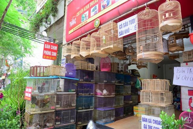 Hầu hết các cửa hàng chim cảnh trên phố Hoàng Hoa Tham những ngày này đều treo biển bán chim phóng sinh để phục vụ nhu cầu tâm linh của người dân trong dịp rằm tháng 7.