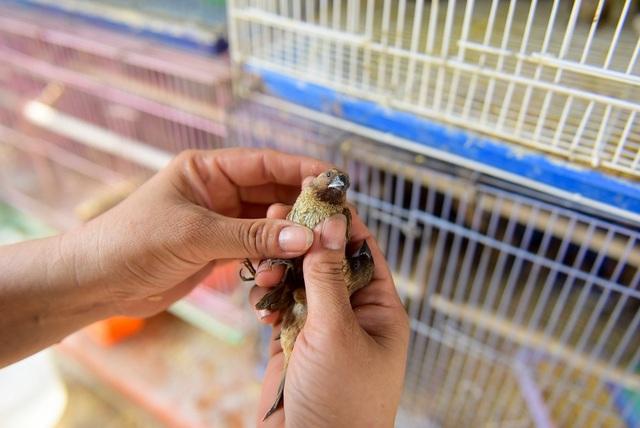 Chim được bán chủ yếu trong dịp này là chim sẻ, giá khoảng 15.000 - 20.000 đồng.
