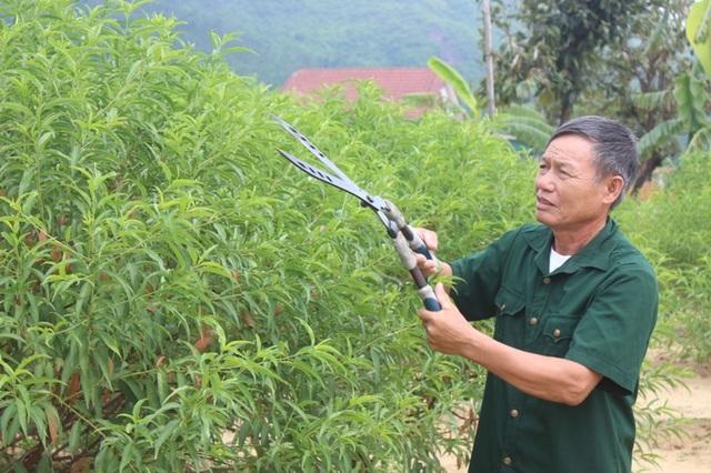 Ông Trà đang chăm sóc vườn đào để chuẩn bị phục vụ dịp Tết