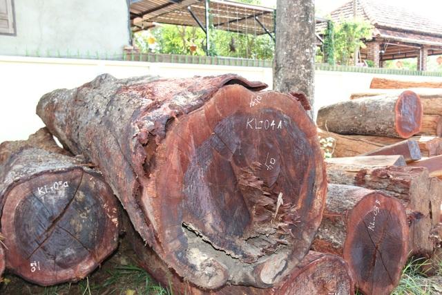 Gỗ tang vật trong vụ bắt trùm gỗ lậu Phượng râu