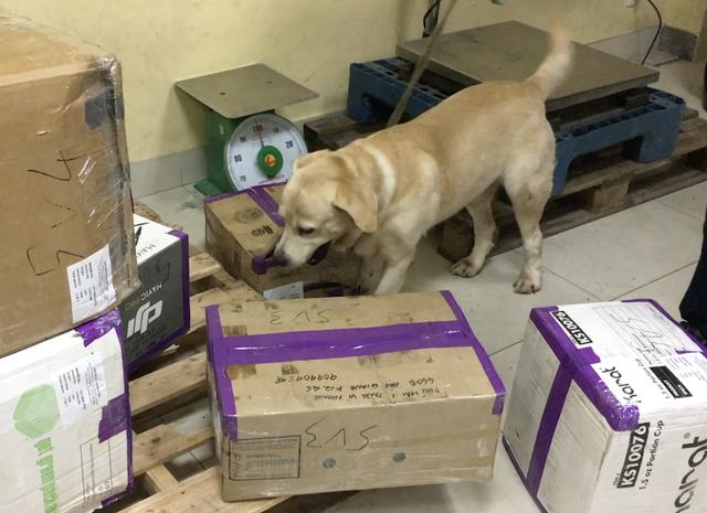 Chó nghiệp vụ tìm ma tuý trong các thùng hàng