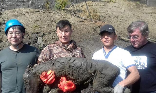 """Con ngựa được đào lên từ hố Batagai, nơi có biệt danh là """"cổng địa ngục"""", hồi đầu tháng này."""