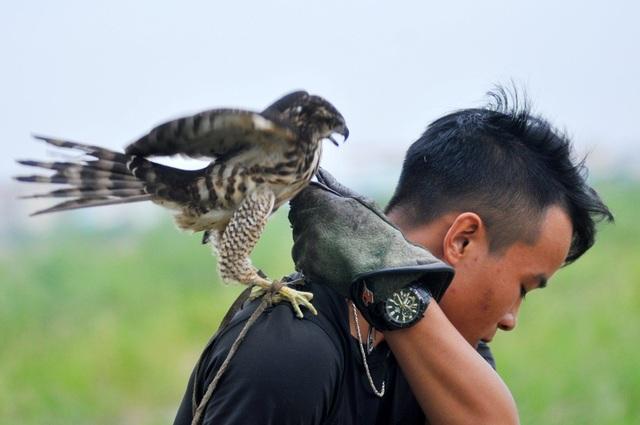 Trong một buổi huấn luyện ngoài trời, những chú chim săn mồi thường phải trải qua 4 bài tập: Đứng và ăn trên găng, qua tay, vồ mồi trên không và tập chế độ săn tự nhiên.