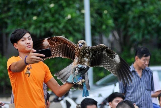 Loài chim săn mồi sống ở tự nhiên nên bản tính khá hung dữ.