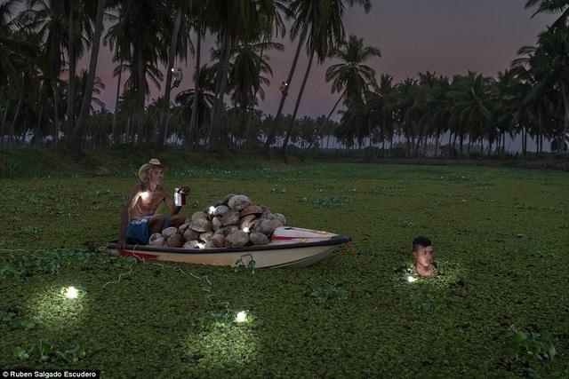 Hai ông cháu đi hái dừa ở Copala, Mexico.