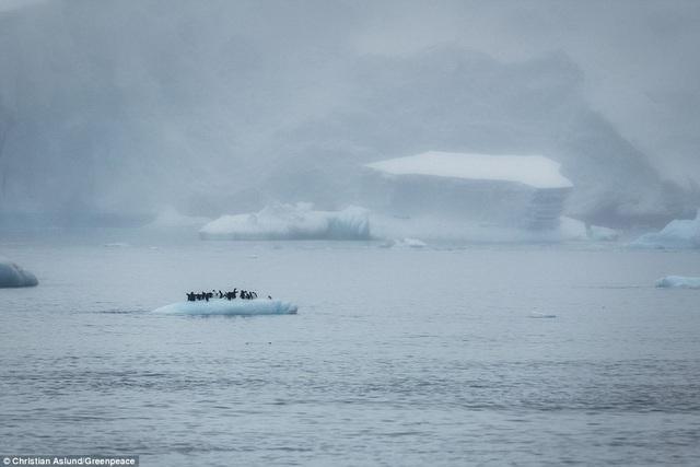 Những chú chim cánh cụt đứng trên một tảng băng nổi ở bán đảo Trinity, Châu Nam Cực.
