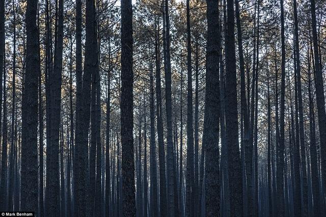 Một vùng rừng vừa trải qua trận cháy ở Bồ Đào Nha, những thân cây còn lại vẫn còn ám khói đen.