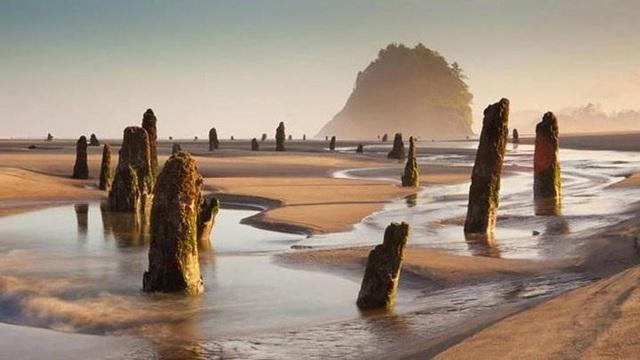 """Trong gần 300 năm bị chôn vùi dưới cát, mùa đông 1997-1998, khi một cơn bão dữ dội tràn vào bờ biển Oregon, một phần những gốc cây của """"khu rừng ma"""" trồi lên mặt nước. Ảnh Pinterest."""