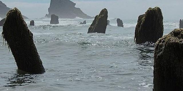 Từ đó, khu rừng ma đã trở thành một vật cố định trên bãi biển. Ảnh Tillamook Coast