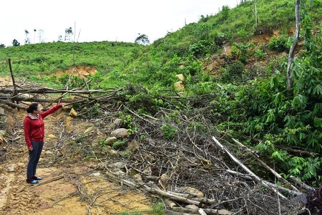 Bà Nguyễn Thị Phúc chỉ tay về phía hơn 1,6ha diện tích đất rừng được cấp nhưng sau đó bị hộ gia đình anh Nguyễn Văn Phúc chiếm dụng