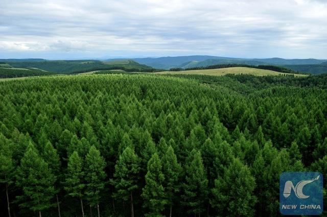 Thảm rừng xanh rộng tới 7400 ha phủ khắp sa mạc