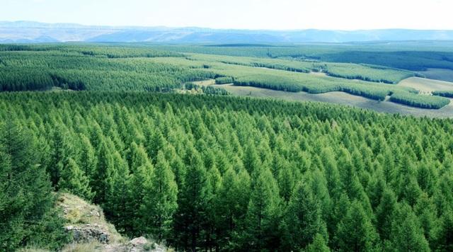 Độ che phủ của rừng tại khu vực này hiện đã lên tới 80%