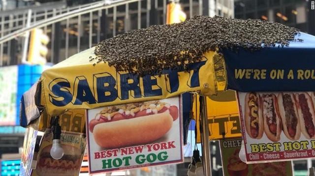 Ong tấn công quầy hotdog