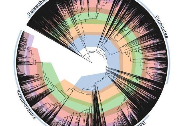 """Các nhà khoa học """"sửa chữa"""" cây đời của vi khuẩn - 1"""