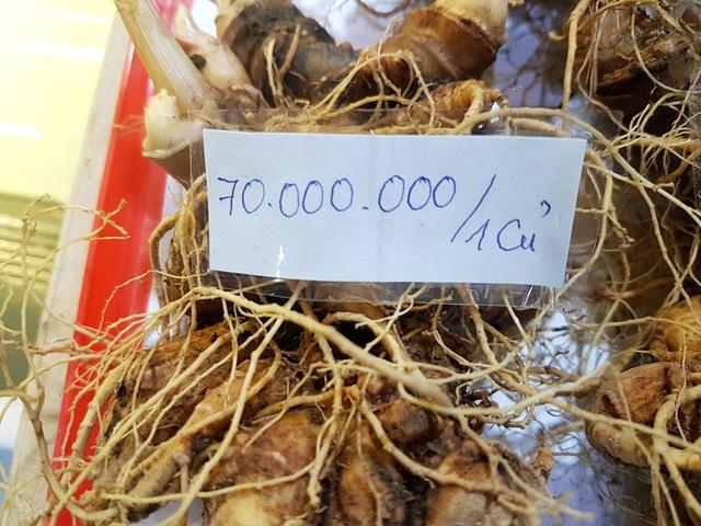 Giá củ sâm Ngọc Linh tại lễ hội