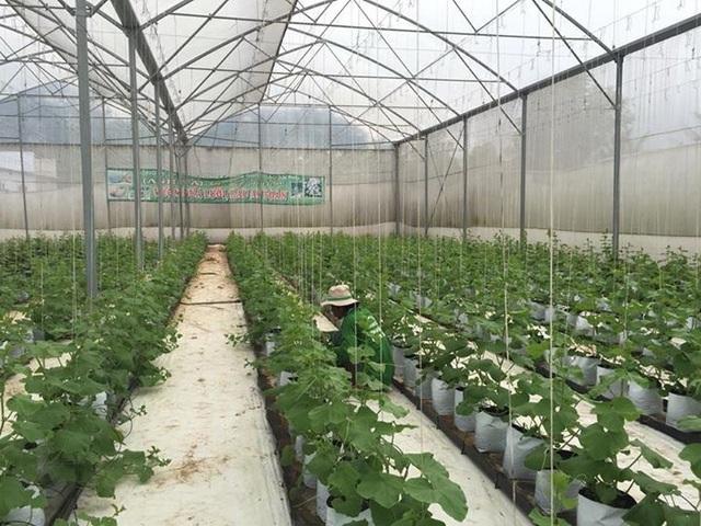 Hiện nay An Giang đang hình thành những vùng sản xuất nông nghiệp ứng dụng công nghệ cao đã được xác lập