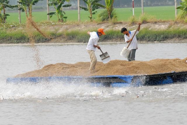 An Giang là tỉnh được Chính phủ chủ trì tổ chức chuỗi sản xuất giống ca tra theo ba cấp
