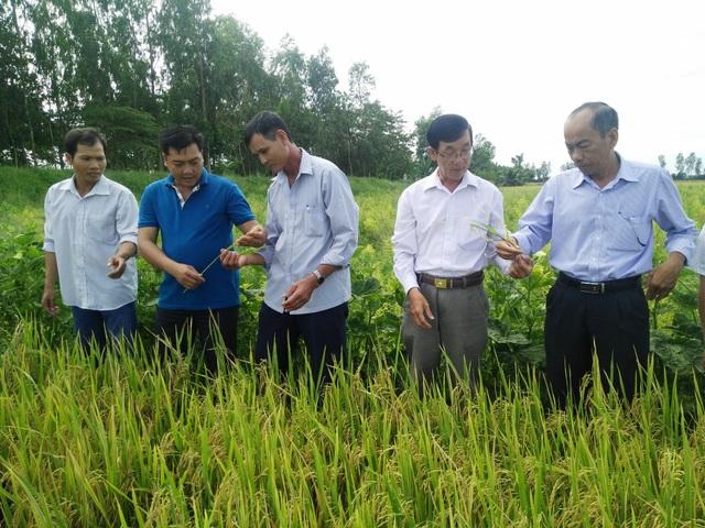 Chính những bước tiến trong việc phát triển nền nông nghiệp ứng dụng công nghệ cao đã giúp nông dân giảm chi phí, tăng lợi nhuận.