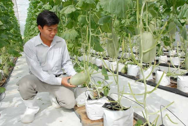 An Giang đang tập trung nguồn lực tháo gỡ những khó khăn để phát triển nền nông nghiệp ứng dụng công nghệ cao, phát triển bền vững