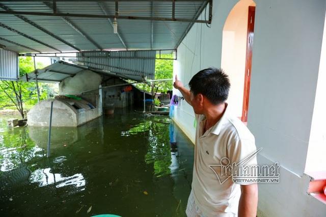 Chuồng trại của anh Nguyễn Tự Ba vẫn chìm trong nước
