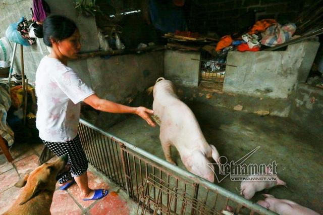 Vợ chồng ông chủ ngày ngày chèo thuyền thăm 100 con lợn đi lánh lũ - 6