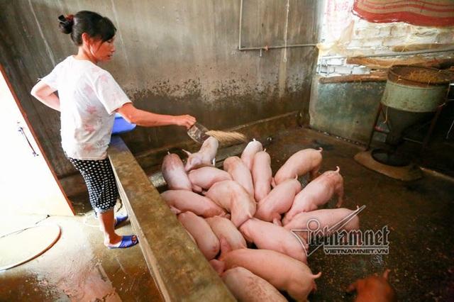 Vợ chồng ông chủ ngày ngày chèo thuyền thăm 100 con lợn đi lánh lũ - 8