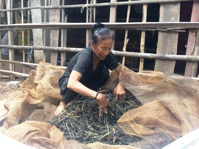 Bà Nguyễn Thị Song cho biết, nước lũ lên bất ngờ đã làm bà mất trắng 1 ha lúa và mấy công đậu xanh.