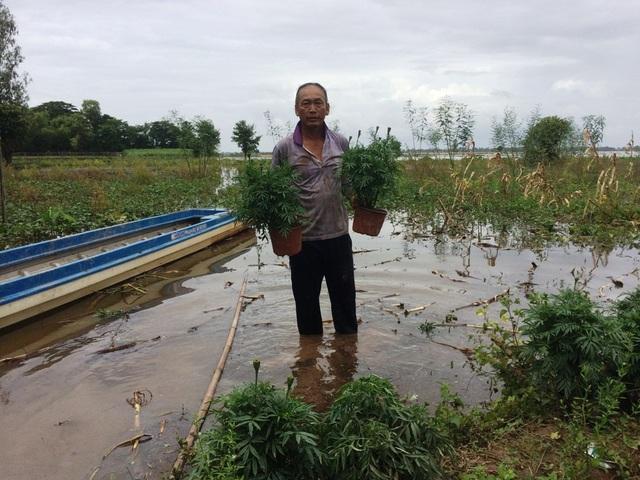 Ông Phạm Văn Tính đang khẩn trương di dời 2.000 chậu hoa vạn thọ lên gò đất cao để chờ bán dịp rằm tháng 7