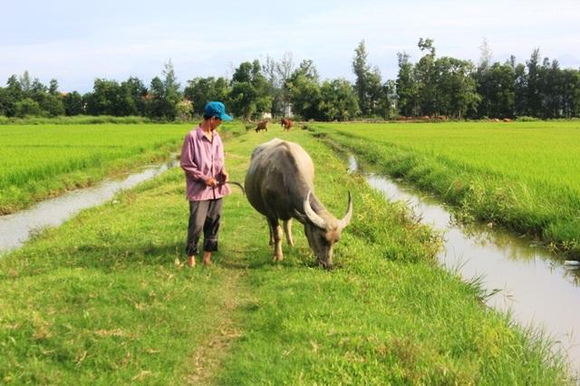 Từ nhiều năm nay, người nông dân nghèo tại xã An Ninh, huyện Quảng Ninh, tỉnh Quảng Bình rất bức xúc trước việc Hợp tác xã tự ý đề ra các khoản thu phí đồng cỏ cho trâu bò, phí đồng ruộng cho gà, vịt.