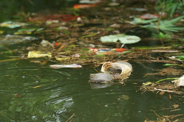 Thập cẩm các loại rác thải sinh hoạt...