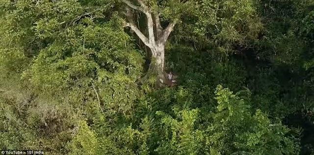 Một khoảnh rừng do ông Jadav trồng nên.