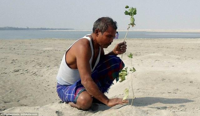 """Ông Jadav cứ thế lặng lẽ trồng cây, chăm cây cho tới khi bất ngờ ông """"bị phát hiện"""" bởi một phóng viên ảnh cũng là một người rất yêu thích tìm hiểu về đời sống thiên nhiên hoang dã - nhà báo Jitu Kalita hồi năm 2007."""