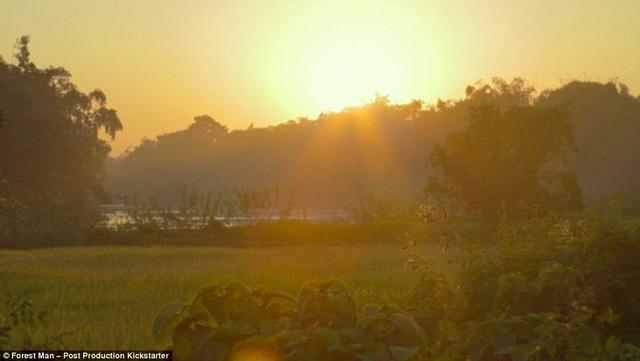 Ấn Độ: Người đàn ông một mình trồng cả cánh rừng trong 40 năm - 5