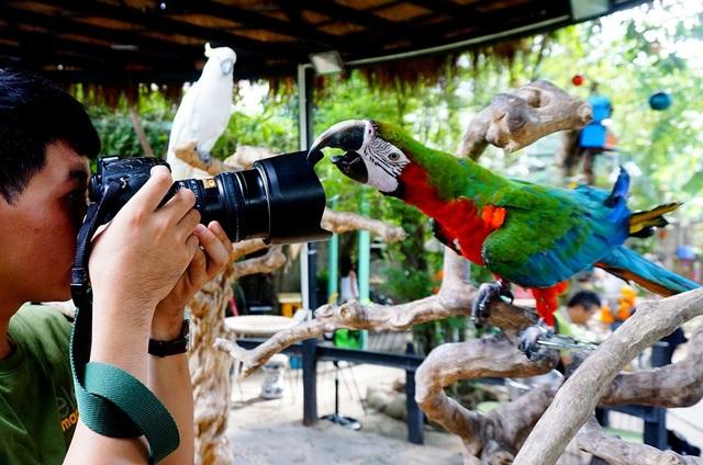 Tỏ ra nghịch ngợm khi khách dùng máy ảnh tiếp cận gần.
