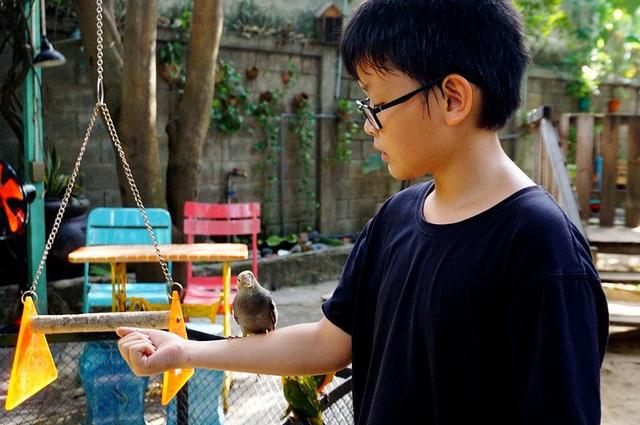 Cậu bé thích thú khi chú vẹt đứng trên tay.