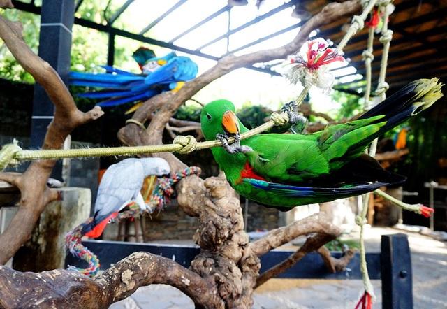 Quán nuôi khoảng 40 con vẹt đủ kích cỡ và chủng loại.
