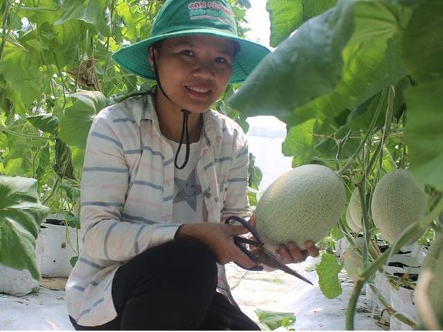 Nữ giảng viên thành công với mô hình trồng dưa lưới
