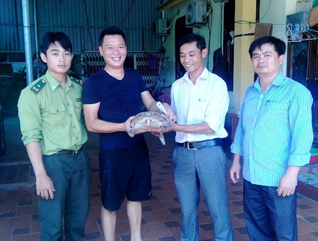 Một cá thể rùa núi viền vừa được người dân tự nguyện chuyển giao cho Trung tâm Cứu hộ, bảo tồn và Phát triển sinh vật (VQG Phong Nha – Kẻ Bàng) để tiến hành chăm sóc, cứu hộ (Ảnh: Ngọc Kiên).