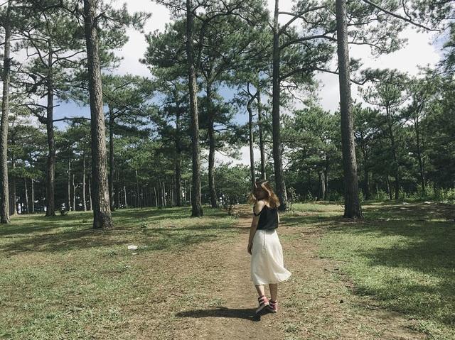 Cảnh nên thơ của Đồi Thông Hai Mộ trở thành địa điểm thu hút khách du lịch. Ảnh: @thao.ngoenn